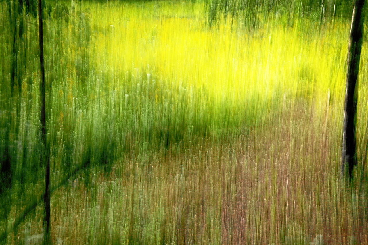 zeche_zollverein_trees_and_grass_icm_impression